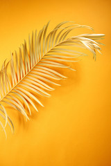 Golden tropical leaf on yellow