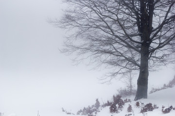 trees in the fog and snow