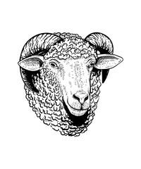 Sheep Head Hand drawn Illustration vector