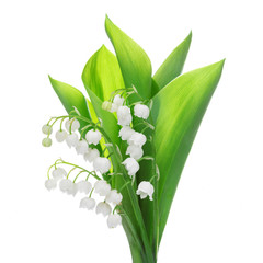 Photo sur Plexiglas Muguet de mai lily of the valley flower isolated on white