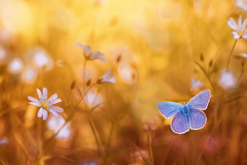 beautiful blue butterfly sitting on a bright sun-drenched summer meadow