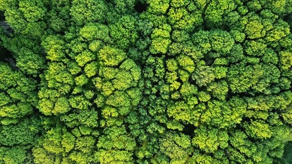 Aerial viev green forest on a spring day, natural background. Photo from the drone Wall mural