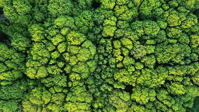 Aerial viev green forest on a spring day, natural background. Photo from the drone