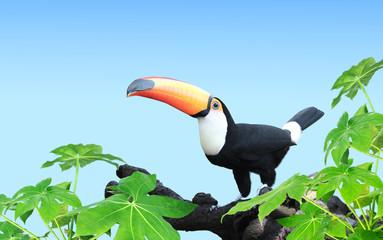 Foto op Plexiglas Toekan Horizontal banner with beautiful colorful toucan bird
