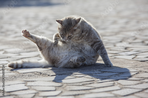Gatto Che Si Lava Stock Photo And Royalty Free Images On Fotolia