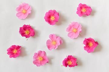 flowers lie on a turquoise background. contrast design. floristics. floristic composition