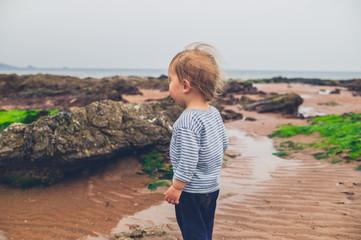 Toddler boy walking on the beach