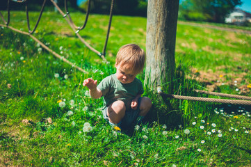 Toddler in playground playing with dandelions