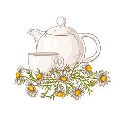 chamomile tea illustration