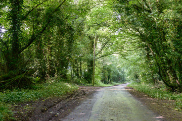 English Country Road in Forest, Captured in Gloucestershire, Shallow Depth of Field