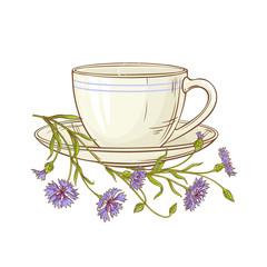 cornflower tea illustration