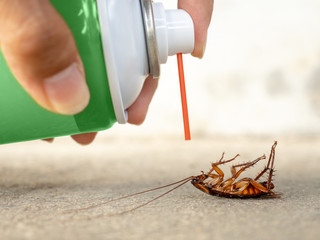 Human hand spraying insecticide on dead cockroach. pest control, health and hygiene concept