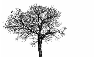 Silhouette dead tree  isolated on white background for scary, death, and peace concept. Halloween day background. Art and dramatic object.