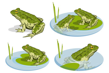 Set of different frogs. Vector frog logo. Frog Sketch. Vector artwork.