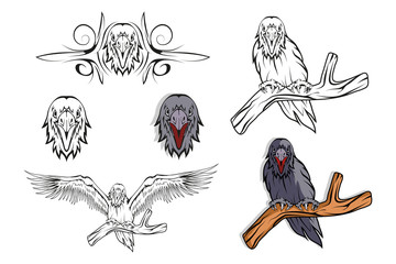 Raven set. Hand drawn raven. Sketch of raven head. Vector artwork.