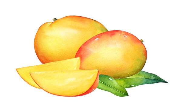 Watercolor composition of mango fruits