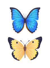 Butterflies Collection Poster Vector Illustration