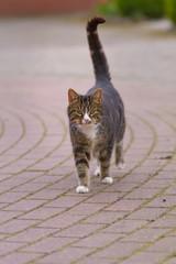 Eine Katze läuft auf einer gepflasterten Straße