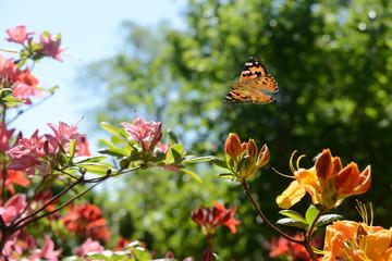 Schmetterling 494