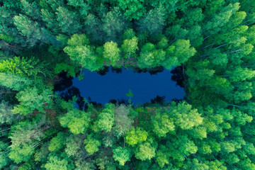Summer nature. Vivid nature background. Lake in green forest.