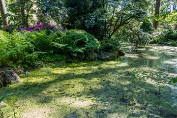 Pond And Ferns