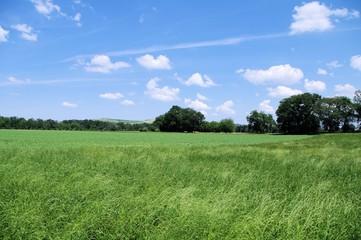 campagna marchigiana,paesaggio,cielo,campo,verde,Italia