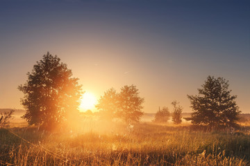 Landscape of bright sunrise over summer misty meadow with trees on clear morning. Natural rural scene of golden field with vivid sun on horizon shining warm sunlight Sun between trees on foggy meadow Wall mural