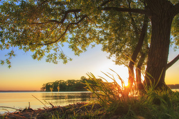 Under large tree on lake shore on sunset in summer. Summer landscape of nature. Big branchy tree on river bank in evening with clear sky on horizon. Warm sunlight on grass. Bright sun shining.