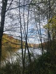 Automne en forêt de France