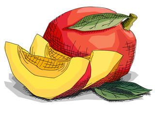 Vector illustration of drawing fruit mangos.