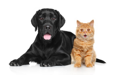 Happy Cat and Dog on a white