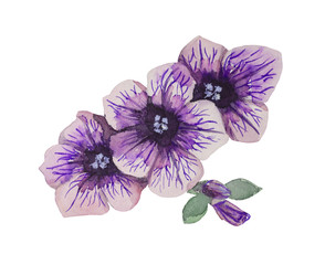 Watercolor Petunia set of three. Purple flower with sapphire stamens, petals and heart of black-lilac color.