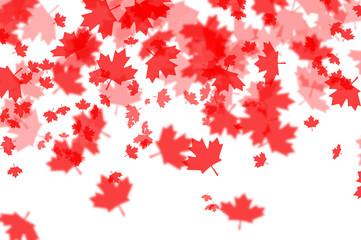 Canada day maple foliage on white