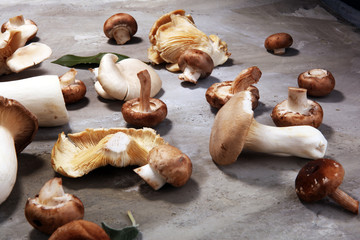 variety of raw mushrooms on grey table. oyster and other fresh mushrooms