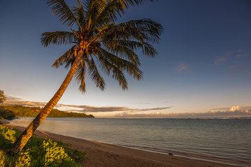 Tropical beach scene with coconut palm