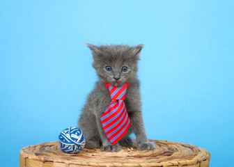 Adorable small grey kitten sitting on wicker basket wearing a red and blue stripped tie next to a blue and white ball of yarn looking at viewer, blue background. Father's Day theme