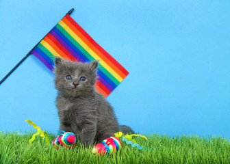 Small adorable gray kitten sitting in green grass with blue background, rainbow flay waving behind and bright rainbow mice in the grass.