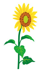 Sunflower -single object