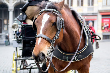 Beautiful horse harnessed to a carriage Brussels, Belgium. Selective focus