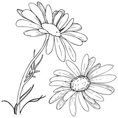 Daisy in a vector style isolated. Full name of the plant: daisy. Vector olive tree for background, texture, wrapper pattern, frame or border.