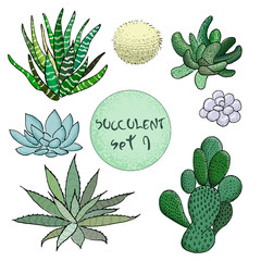 Succulent cactus collection. agave, aloe, gastraea, haworthia, echeveria, Pachyphytum, prickly pear,