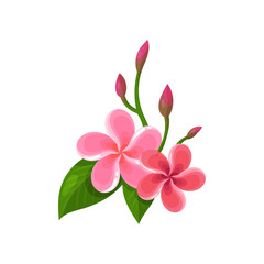 Icon of frangipani plumeria . Tropical flowers with pink petals and green leaves. Flat vector for postcard, botanical book or banner