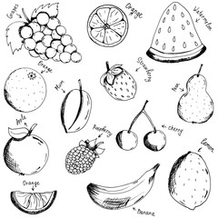 Fruits and berries. Growing vitamins. Right meals. Sketch. Hand drawing. Print, for T-shirts. For your design.