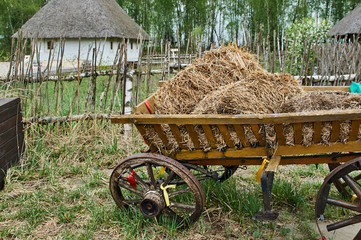 Ukrainian cart with hay in the background of the village