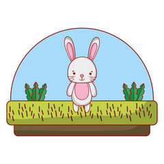 rabbit cute animal in the countryside and plants