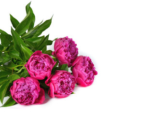 A bouquet of five beautiful peonies on a white background.