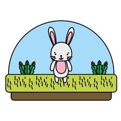 color rabbit cute animal in the countryside and plants