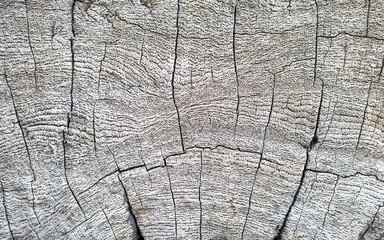 Closeup old wood texture background, natural dry wood texture