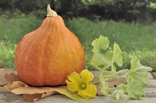 pumpkin and flower  on a garden table