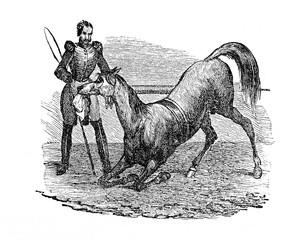 Circus horse (from Das Heller-Magazin, June 21, 1834)